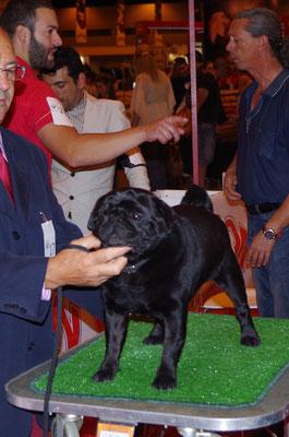 ABIERTA MACHOS: Yacky de Diamond pugs