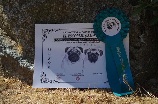 Diploma para el Mejor Carlino del Concurso