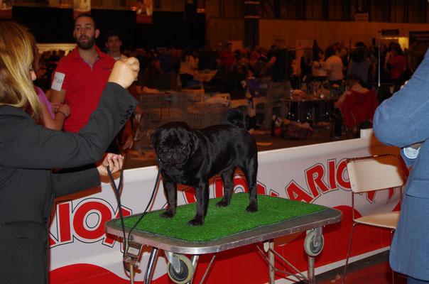 ABIERTA MACHOS: Gyakutsuki de Diamond pugs
