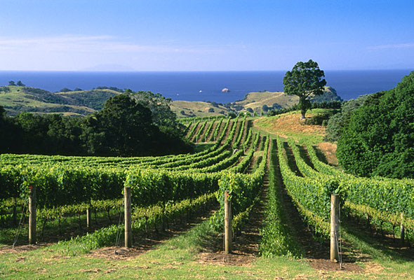 Man O War - Waiheke Island. By NZ Wine