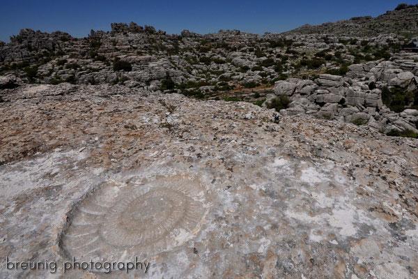 paraje natural torcal de antequera IV - das fossil