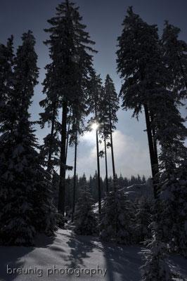 puerschling / unterammergau: snowy spruces