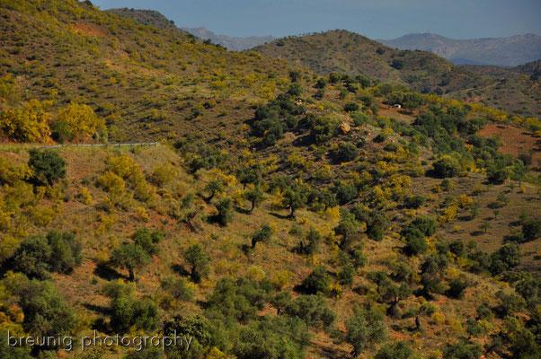 auf dem weg nach antequera III - andalusien feeling pur