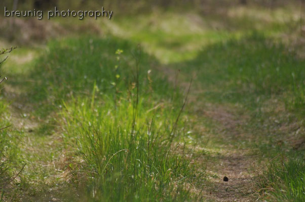habitat echinger lohe: getting green