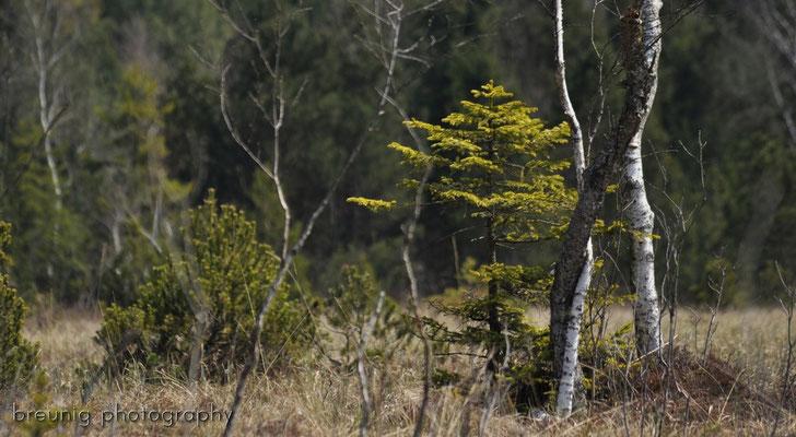 lake eitzenberg: habitat