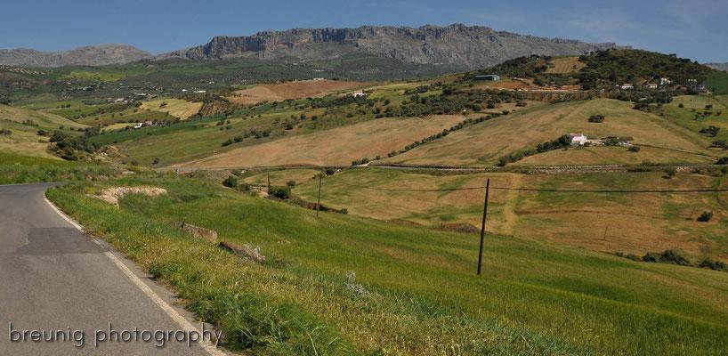 auf dem weg nach antequera VI - andalusien feeling pur .. sonnig, sattes grün - was will man mehr