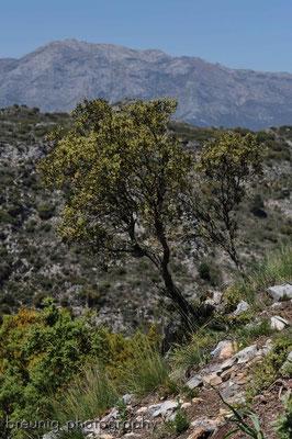 serra blanca im hinterland von marbella VI