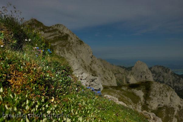 ammergauer alps: hochplatte IV