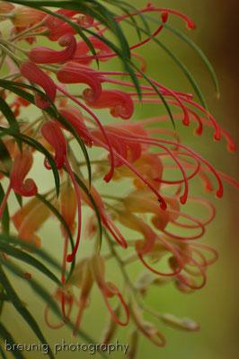 spanische botanik XVI