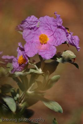spanische botanik IV