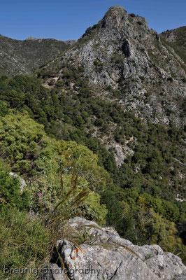 serra blanca im hinterland von marbella I