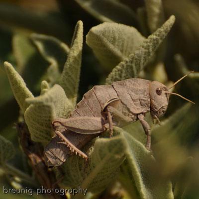 weitere bekanntschaft mit der endemischen tierwelt III .. für fortgeschrittene quasi