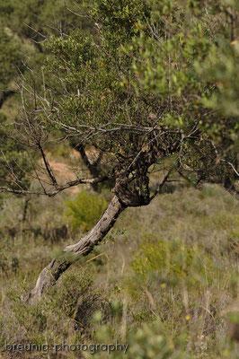 typisches bild für andalusien