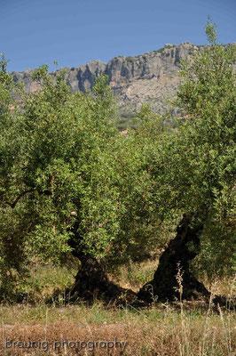 olivenhain I