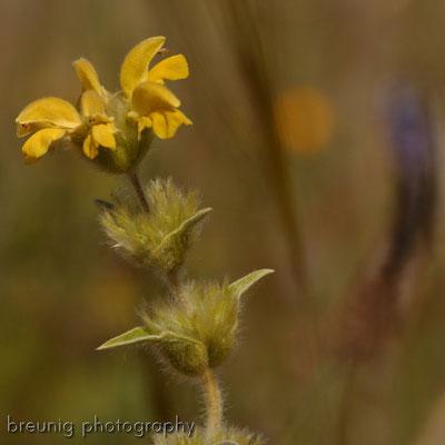 spanische botanik VII