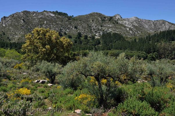 serra blanca im hinterland von marbella VII