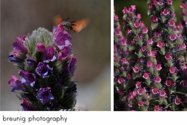 spanische botanik III - insekt inklusive