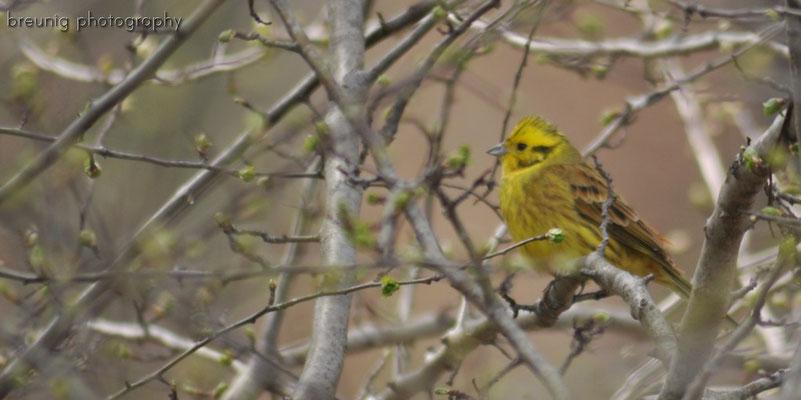habitat echinger lohe: not identified yet