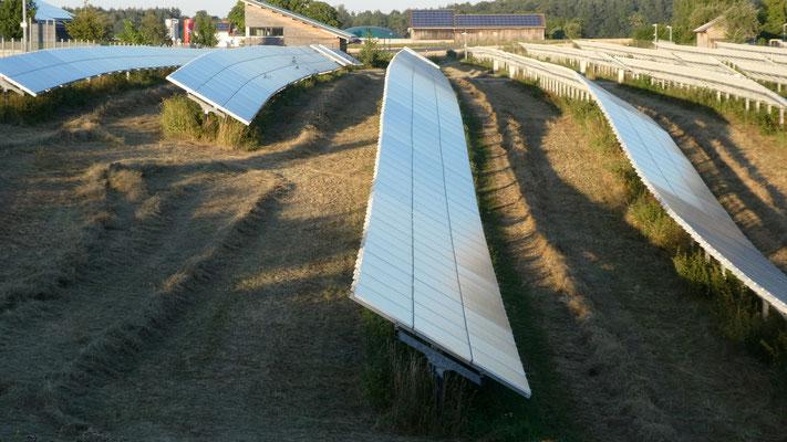 Heuernte unter den Solarmodulen im Solarpark in Blaubeuren-Asch 23. Juli 2019