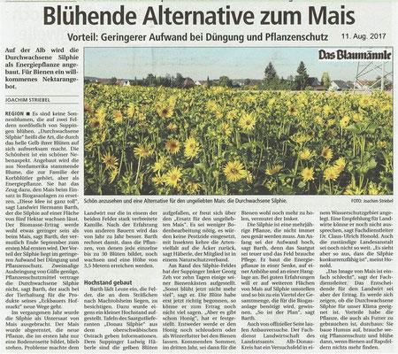 Bericht Das Blaumännle vom 11.08.2017 Blühende Alternative zum Mais die Durchwachsende Silphie
