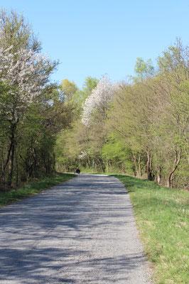 Am Radweg im Frühjahr