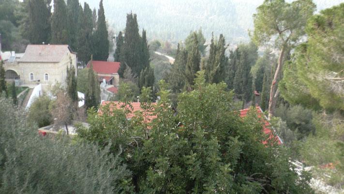 Высаженные деревья на территории монастыря
