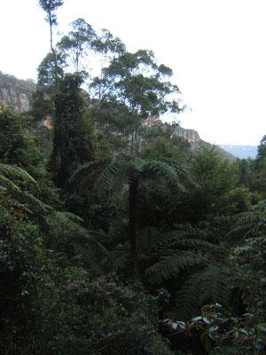 in den regenwald