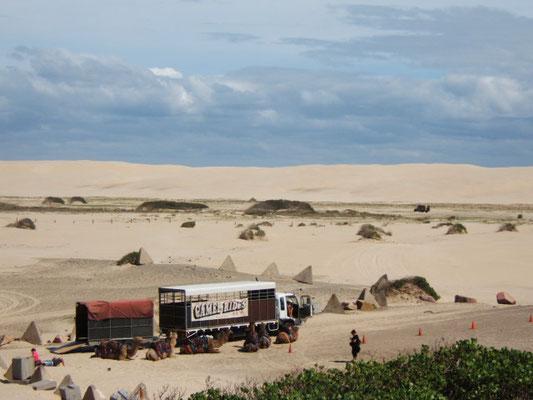 ... wüste.