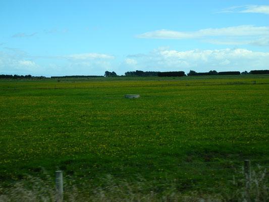 oh, Friesland?