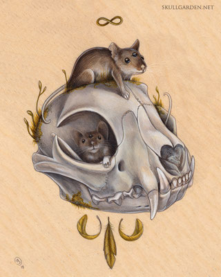 Mice with Bobcat Skull. 2014.