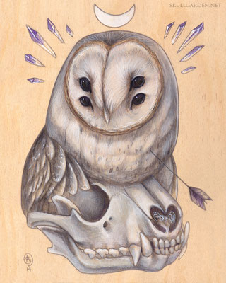 Barn Owl with Raccoon Skull. 2014.