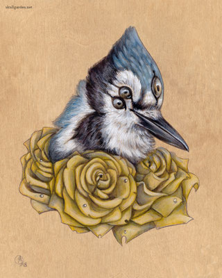 Blue Jay with Roses. 2013.