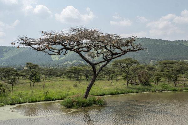 Akagera NP, Rwanda