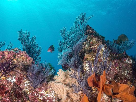 Reefscape, Cabo San Lucas