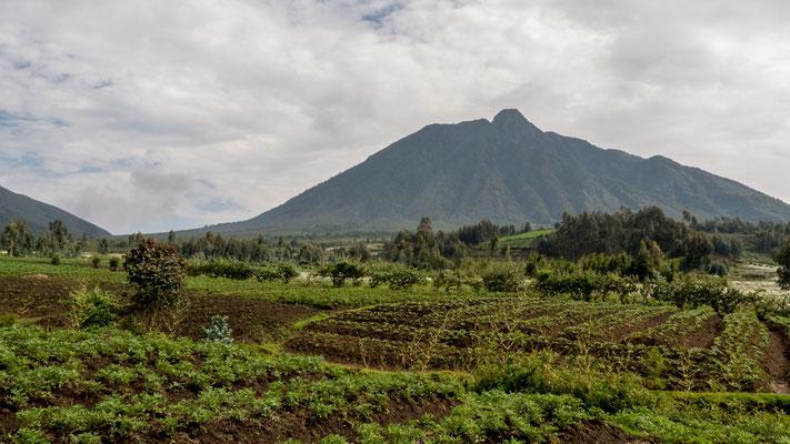 Volcanos NP, Rwanda