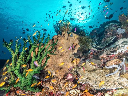 Reefscene - Milne Bay