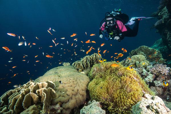 Reefscene with Anemone and Diver
