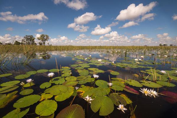 Okavango Delta [Botswana, 2015]