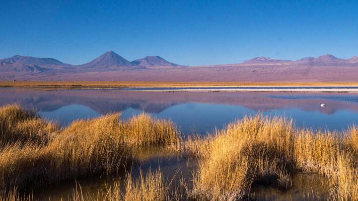 Laguna Cejar (extremely saturated saltwater, similar to dead sea), near San Pedro de Atacama [Chile, 2014]