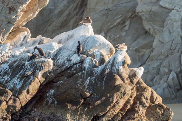 Sea lions at Land's End, Cabo San Lucas