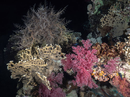Reef during nightdive