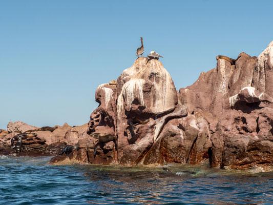 Sea lions at Isla Lobos, near La Paz