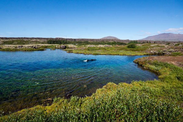 Thingvellir National Park and Silfra fissure with Snorkeler