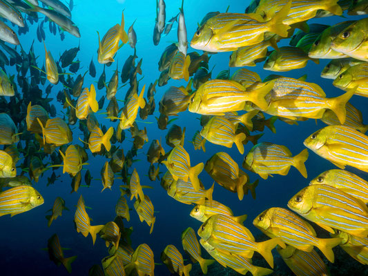 In the middle of schooling fish swarm, Cabo San Lucas