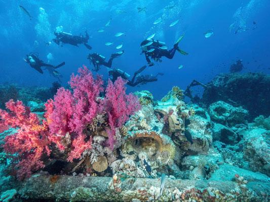 Jolanda reef