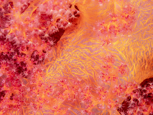 Close up of a soft coral