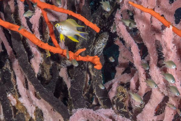 Reefscene - Kimbe Bay