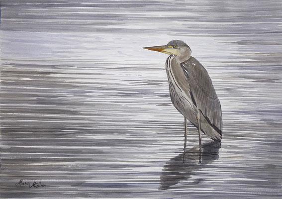 MatsMüller, Häger, Grey Heron, 40x30cm