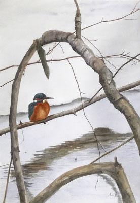 MatsMüller, Kungsfiskare, Kingfisher, 60x40cm