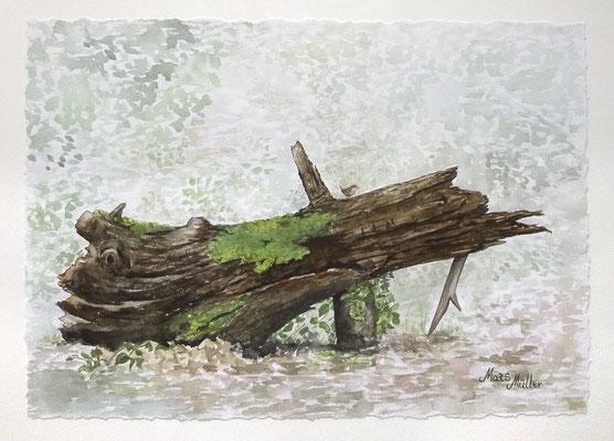 MatsMüller, Gärdsmyg, Wren, 41x29cm